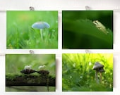 Set Of Four Forest Prints Creatures In The Forest Natural History Mushroom Green Tree Frog Protection In The Forest Green Grass