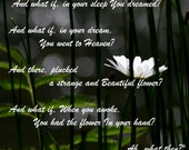 Canvas White Daisy 'What if You Slept' poem by Samuel Taylor Coleridge Poetry Inspirational Quote Photography Canvas