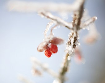 Winter photograpy, red berries, icy branches, powder blue, rustic, pastel, dream, Canadian forest, winter wonderland, cabin, Christmas