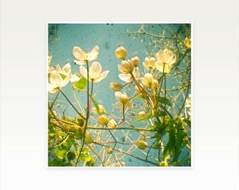 Nature Photography, Flower Art, Shabby Chic Decor, Spring, Floral - Look Up and You Will See