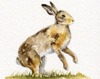Watercolor sketch - Hare no. 2