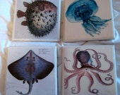 Sea Creature Awesome Coaster Set