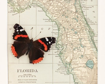 Vintage Florida Map with Real Framed Butterfly