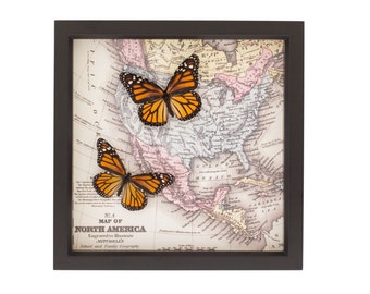 Framed Map North America Monarch Migration Real Butterfly