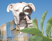 Peekaboo, large original photograph of white boxer dog wearing clothes looking at monarch butterfly caterpillar