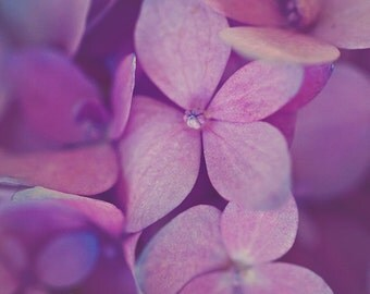 Pink Hydrangea Macro Nature Spring Home Decor Photograph