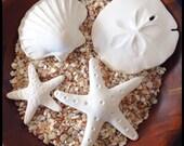 Ocean Tile Collection