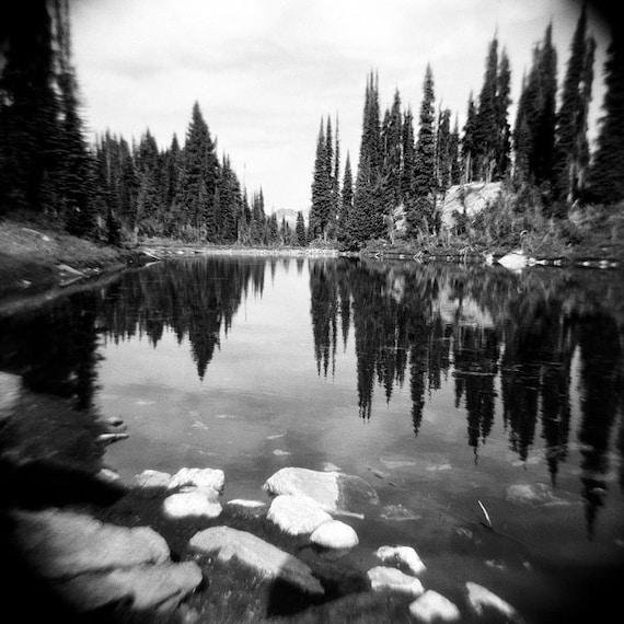 forest photo black white landscape decor holga nature