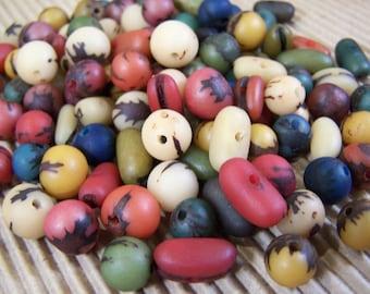 FREE SHIPPING - 32 pcs Mixed Colors Natural Acai Seeds (1401-2)