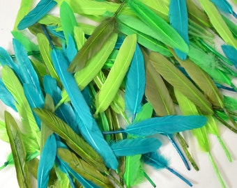 Middling Duck Quills, Stiff loose feathers - Amazon Rainforest (100pcs)