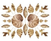Golden Leaves Collage 8x10. Fine Art Photographic Natural History Print. Scandinavian style. Natural Home Decor. Kitchen