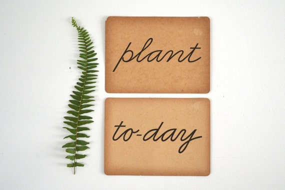two old paper flashcards | plant today