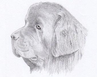 Newfoundland Dog Note Cards - Gift Set of Eight - Free Shipping US - Original Pencil Art Design - Desert Impressions