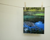 Nature Photography, Missouri Ozark Spring,  Fine Art Nature Print, Nature Home Decor, Ozark Wall Decor