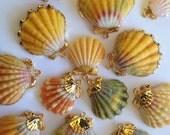 14k Gold Dipped Trimmed or Encased Sunrise Shell