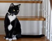 Wedding Cat Collar Bow Tie Cat Collar with Rhinetones and bell   Wedding Cat  Breakaway Collar Custom Made