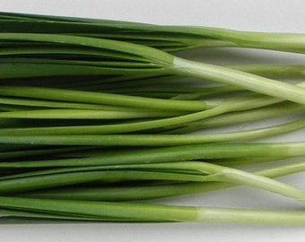 Organic Garlic Chives | Perfect for Containers