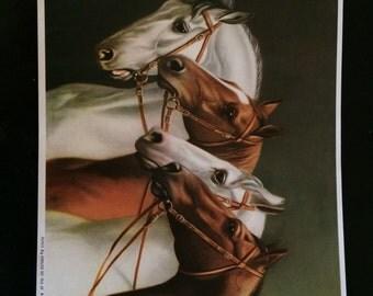 VINTAGE German Horse Print - 4 Horses