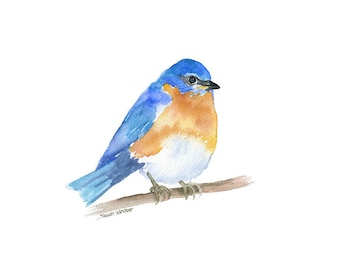 Eastern Bluebird Watercolor Painting - 10 x 8 - Giclee Print - 11 x 8.5 - Bird Art - Bird Watcher