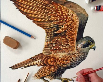Peregrine Falcon painting - Original Watercolor