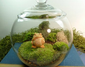 Small Covered Vase Terrarium, Frog, Moss.  Great for HOME or OFFICE. Nice Unusual Gift. Terrariums by mossterrariums on Etsy.