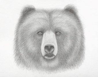 Bear spirit pencil drawing art 11x17 print