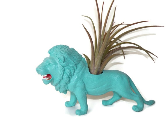 Lion animal planter in turquoise blue with gorgeous air plant.