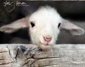 hello world - lamb photography - fine cards (and farm fresh)