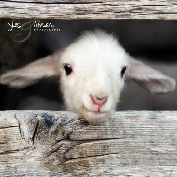 hello world - lamb photography - fine cards (and farm fresh)