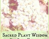 Sacred Plant Wisdom vol. 8: Yarrow- Sacred Warrior & Sacred Boundaries