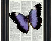 BOGO SALE Butterfly Art Print Butterfly Dictionary Art Print Upcycled Dictionary Print Beautiful Blue Butterfly Print on Vintage Dictionary