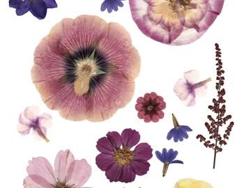 Digital pressed flowers