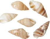 20 Shells Great Beach Jewelry Item Natural Shells with Pre Drilled Hole - BD636