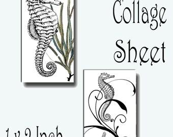 Ocean Fish Seahorse Seashells Domino 1 x 2 inch Instant Download Digital Image Collage Sheet (13-41)