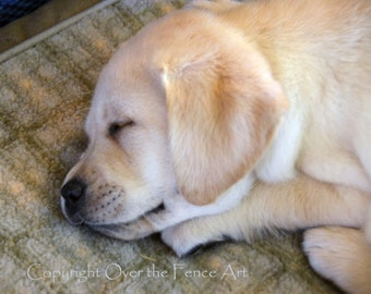 YELLOW LABRADOR PUPPY Photo Greeting Card