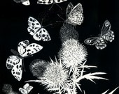 Butterflies Dance Blank greetings card of an original Scraperboard design
