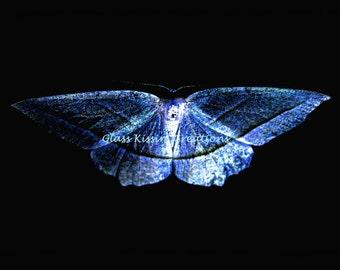 "Luminata-  Fine Art Photography metallic print 8 x 12""-silver-blue-iridescent-moth"