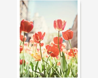 NYC Photo Red Tulip Print New York City Cityscape Park Avenue Tulips