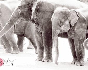 Elephant Print, Elephant Photography, Nursery Print, Baby Elephant Photograph, Black and White Elephant Photograph