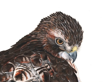 Red Tailed Hawk Watercolor painting - Print of watercolor painting - A4, bird art, wall art, home decor