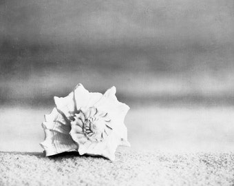 "Black and White Seashell Photography - beach sea shell wall art white grey gray conch seashore print coastal - 20x24 Photograph, ""Paradise"""