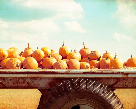 "Autumn Photography, pumpkins fall nature photo print orange wall art blue farm country decor rural, 16x20, 11x14, 8x10 Photograph, ""Harvest"""