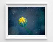 "Yellow Flower Photograph Unframed / flower bud night stars moon / yellow midnight blue cobalt bedroom art / photography print / ""Good Night"""