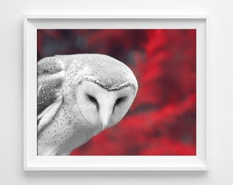 "Dramatic Owl Photograph Unframed / fairy tale forest gothic woodland winter / scarlet red black white photography print/ ""Lovely Bloodflow''"