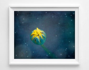 "Yellow Flower Photograph Unframed / flower bud night stars moon / yellow midnight blue cobalt bedroom art / photography print / ""Good Night"""