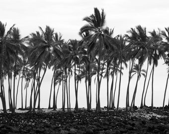 Palm Trees print, Palm trees canvas, Palm trees photo, black and white palm trees, oversized art, Hawaii photo, Hawaii print, Hawaii art