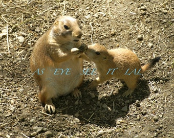 Mother PRAIRIE DOG with pup  photo greeting card 5x7 blank inside