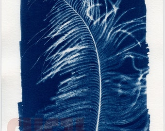 "Feather - 5""x7"" Cyanotype Unique Print"