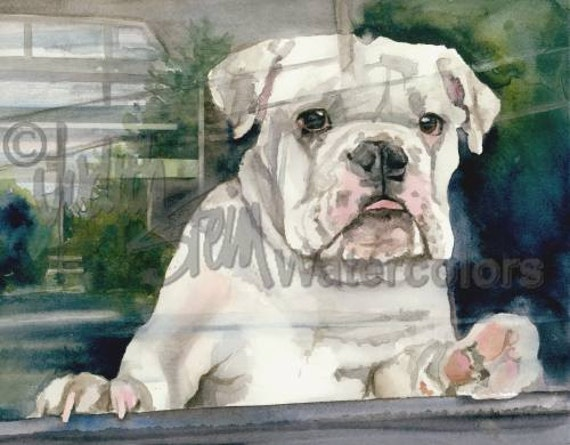 English Bulldog Cream White AKC Non Sporting Pet Portrait