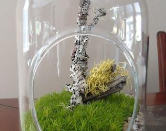 "9.5"" Live Moss Terrarium-LG Capsule W/Moss, Lichen Branches"
